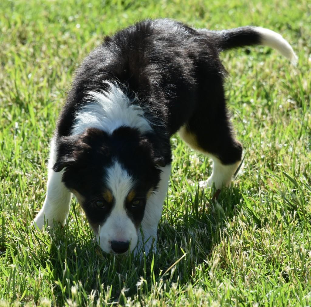 Ben (Dog)